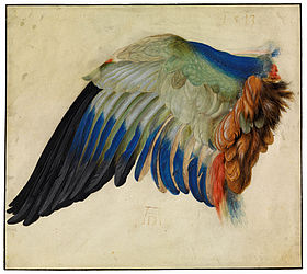 A European roller's wing. Watercolours and opaque colours on parchment by Hans Hoffmann (school of Dürer), 1513 | SBB, I A 13h